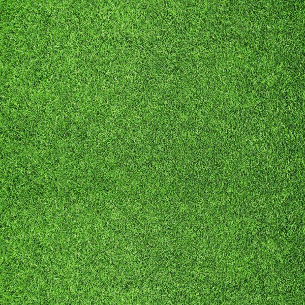 טפט דשא