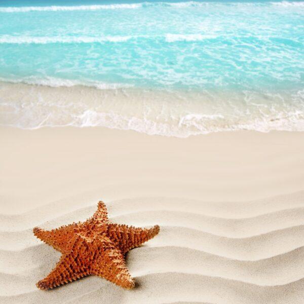 טפט חוף ים